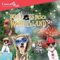 DOG DOES DISCO in WONDERLAND.