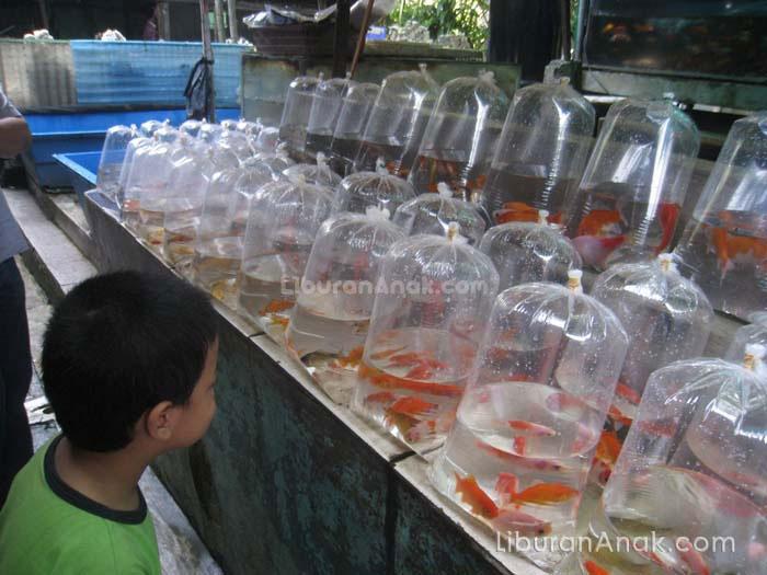 Pasar Ikan Hias Sumenep Kids Holiday Spots Liburan Anak