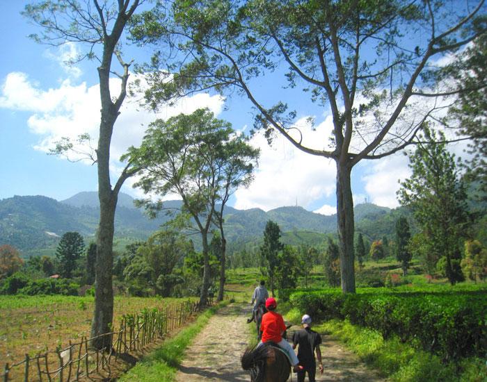 Agro Wisata Gunung Mas