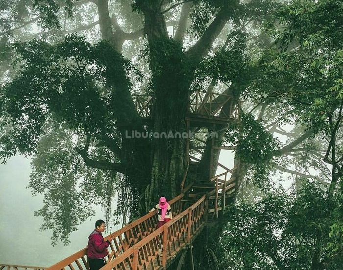 Rumah Pohon Jembatan Kayu Gantung Curug Ciherang Jonggol Kids