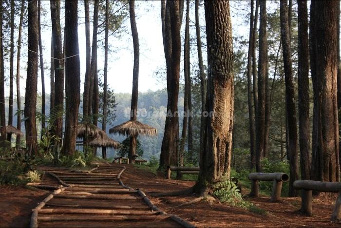 Pal 16 Wisata Hutan Kota Cikole