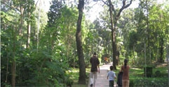 Hutan Kota Tebet