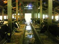 Cibubur Garden Dairy (Cibugary)