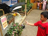 PVJ Bird Park
