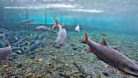 Kolam Ikan Dewa Cibulan