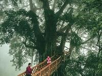 Rumah Pohon & Jembatan Kayu Gantung Curug Ciherang Jonggol