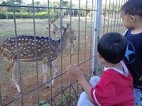 Taman Rusa Kemang Pratama