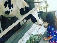 Milkindo Malang