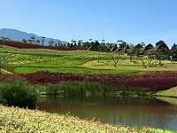 Vimala Hills
