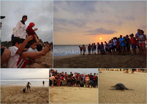 Ujung Genteng (5): Sea Turtle Conservartion Pangumbahan Beach