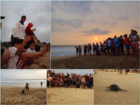 Ujung Genteng (5): Sea Turtle Conservartion Pangumbahan Beach