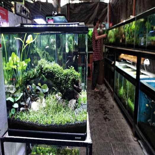 Pasar Ikan Sumenep